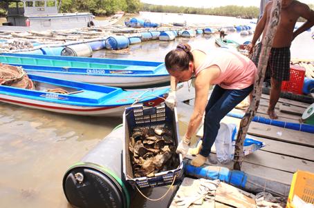Đồng Nai: Rộ phong trào nuôi hàu nước lợ - 572af4d3e7bff