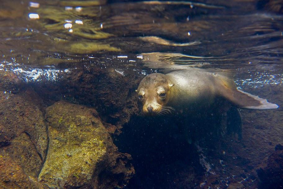 galapagos - Galapagos_FB_2-52.jpg