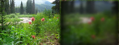 on the left a pretty scene of trees and flowers, on the right the same scene blurred and darker as if seen through dark glasses