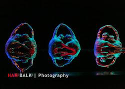 Han Balk Wonderland-7412.jpg