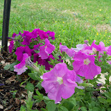 Gardening 2011 - 100_7640.JPG