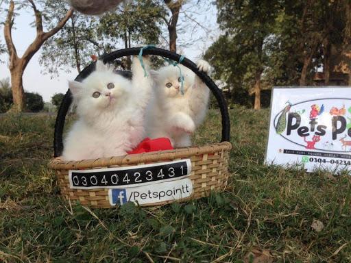 Pets Point Lahore