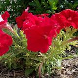 Gardening 2012 - 115_1714.JPG