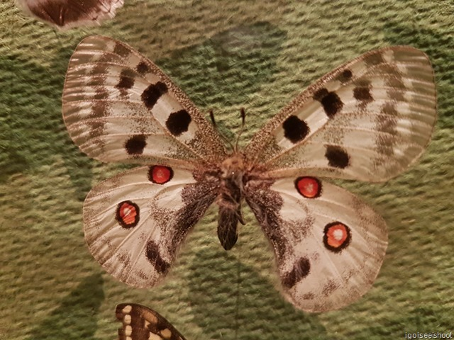 Butterfly at Natural History Museum in Stockholm