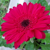 Gardening 2010 - 101_1017.JPG