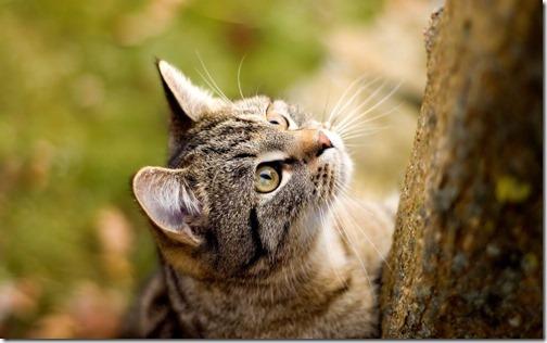 22 fotos de gats (23)