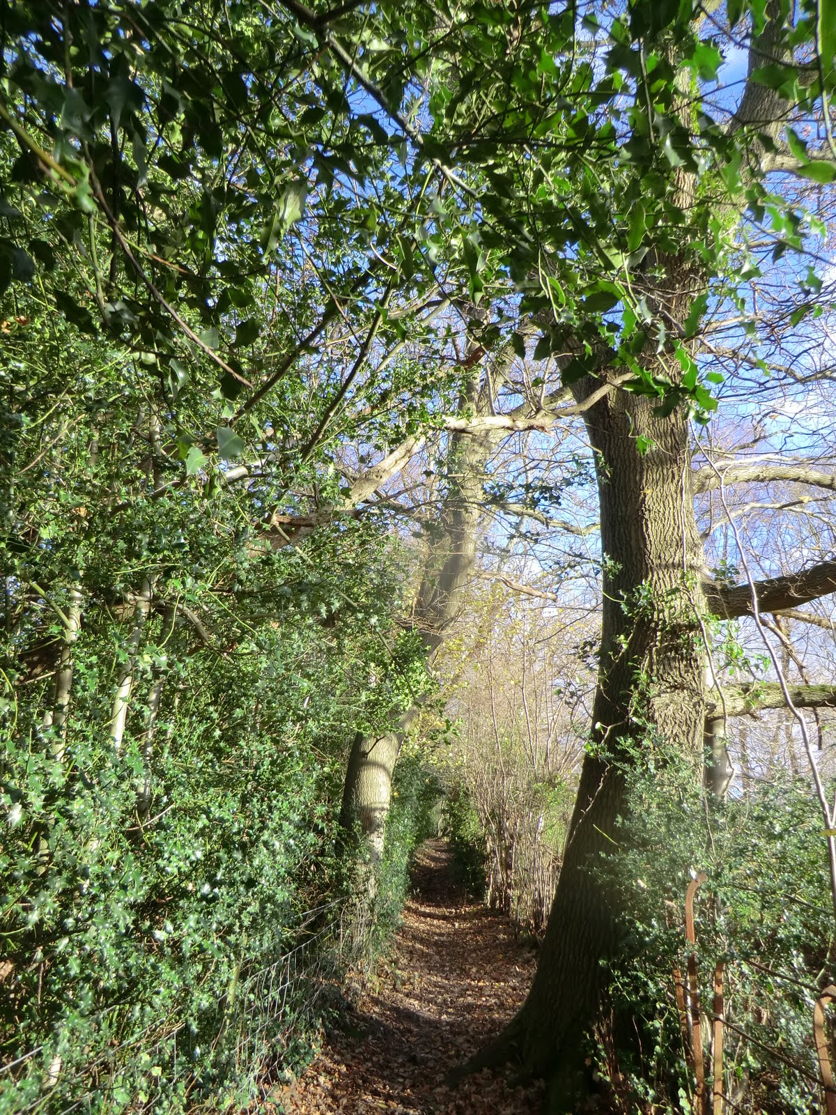 CIMG1830 Footpath to Speldhurst