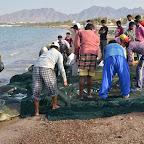 Polowy raczej zaliczone do udanych! Ale co w sieciach robią żółwie?