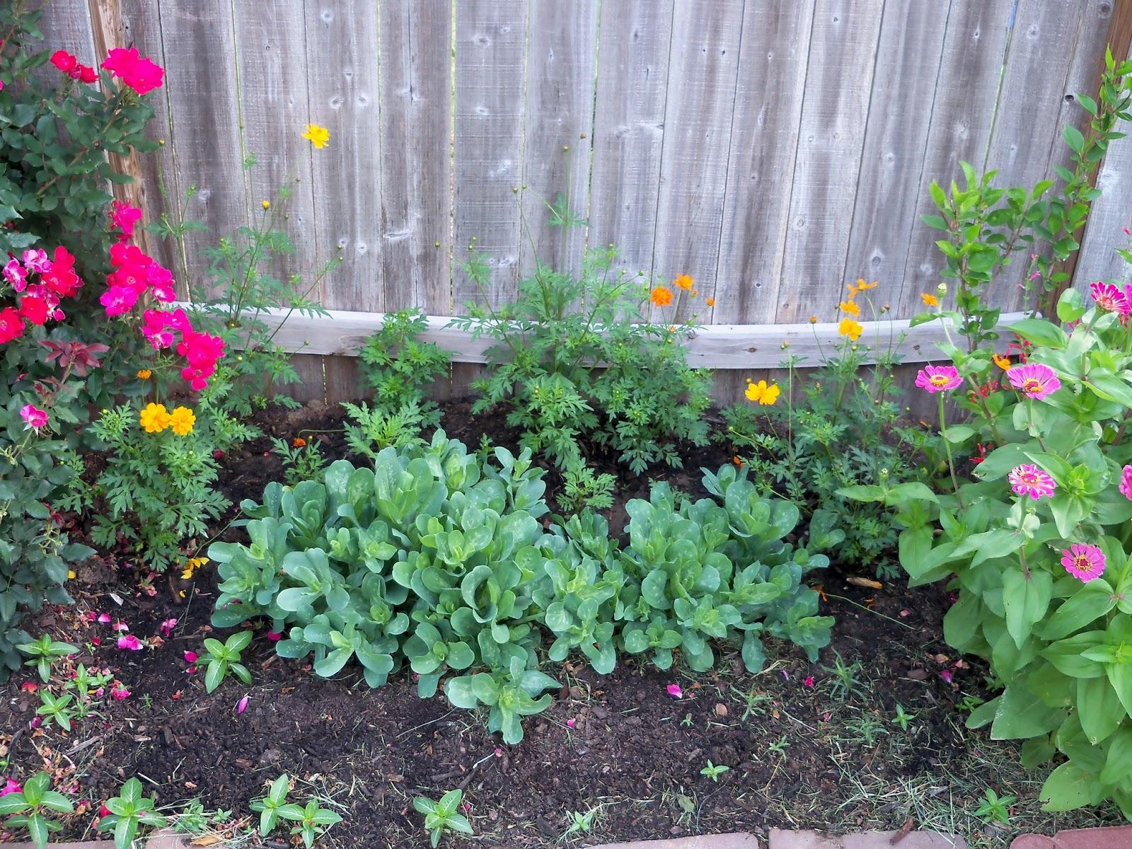 Gardening 2011 - 100_8222.JPG