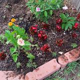 Gardening 2010 - 101_0932.JPG