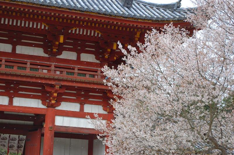 2014 Japan - Dag 8 - jordi-DSC_0550.JPG