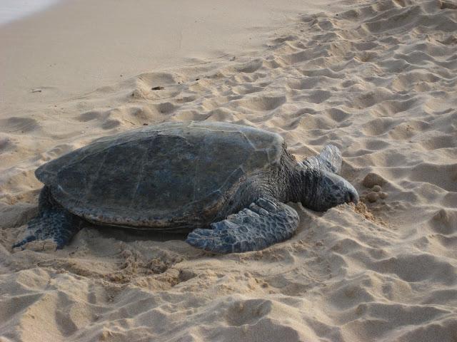 2012 - IMG_6165_Poipu_Beach.JPG