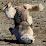 Lupine Wolf's profile photo
