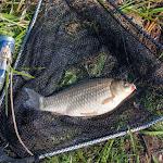 20150427_Fishing_Prylbychi_049.jpg