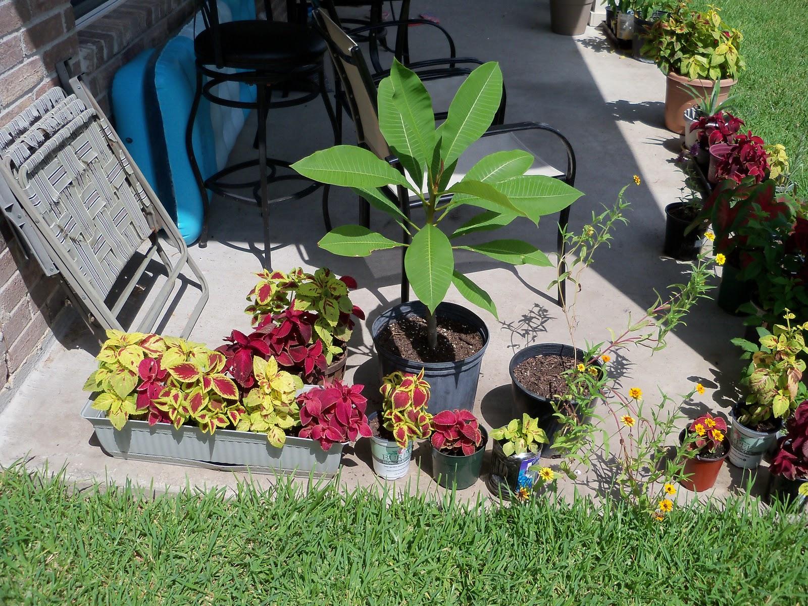 Gardening 2010, Part Three - 101_5129.JPG