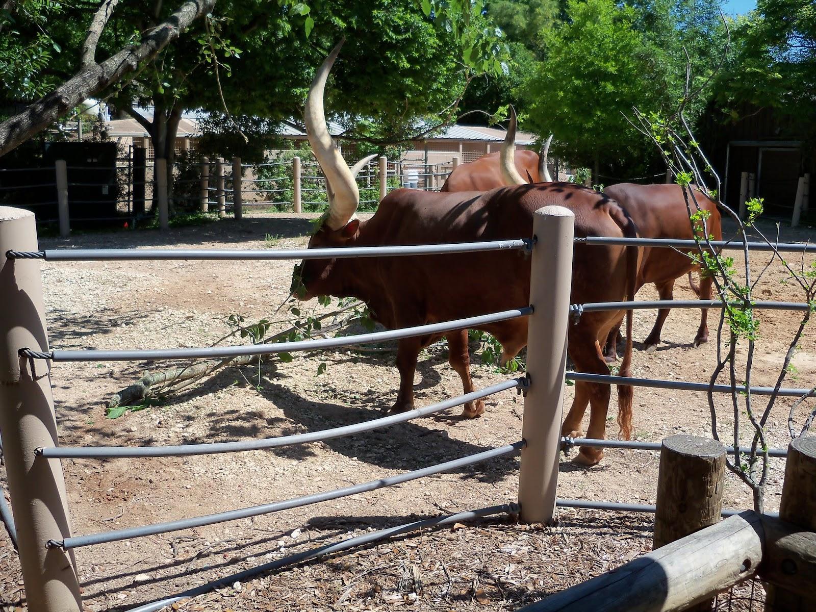 Houston Zoo - 116_8438.JPG