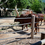 Houston Zoo - 116_8438.JPG