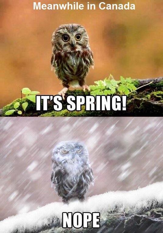 [Spring-nope%5B3%5D]