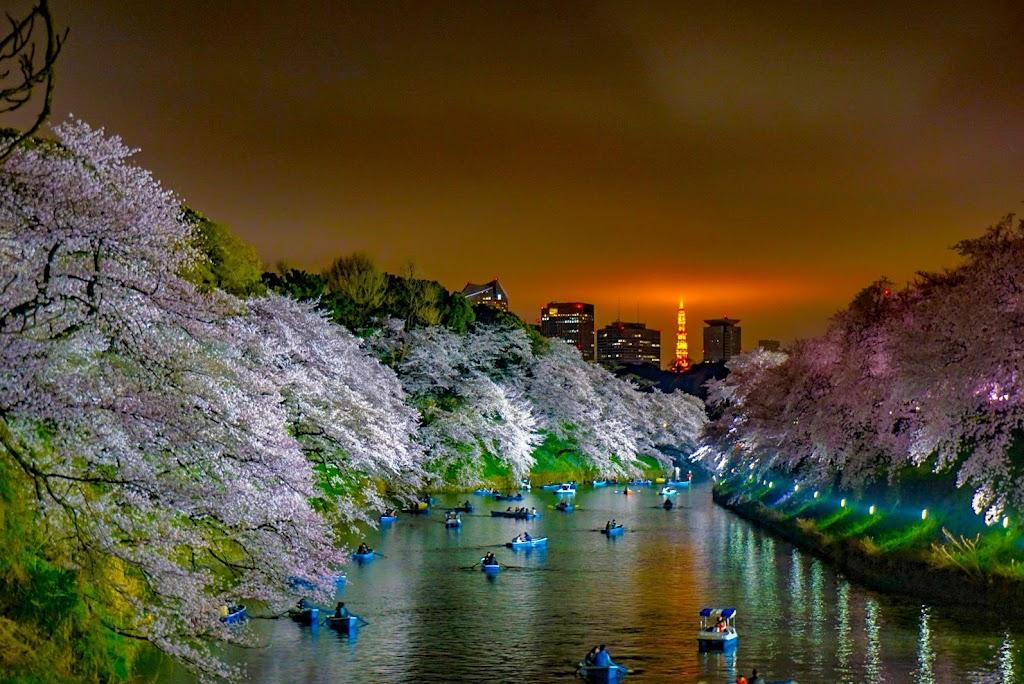 千鳥ヶ淵から撮影した東京タワーの写真