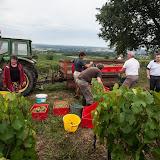 2013 vendanges du chardonnay - 2013%2B09%2B28%2BGuimbelot%2Bvendanges%2Bdu%2BChardonnay%2B122.jpg