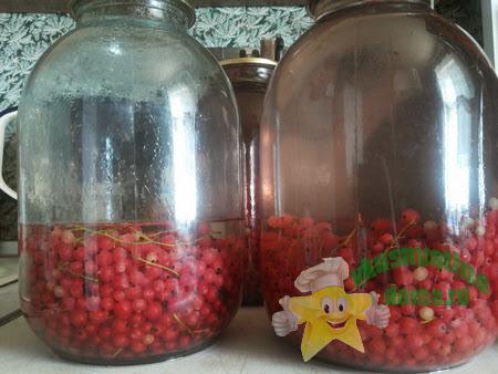 Готовим компот из красной смородины на зиму