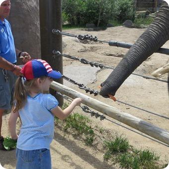 Feeding the Elephant at Cheyenne Mountain Zoo