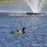 2013 Spring Flora & Fauna - IMGP6422.JPG