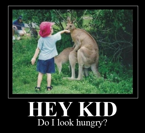Kid Feeding Mating Kangaroo