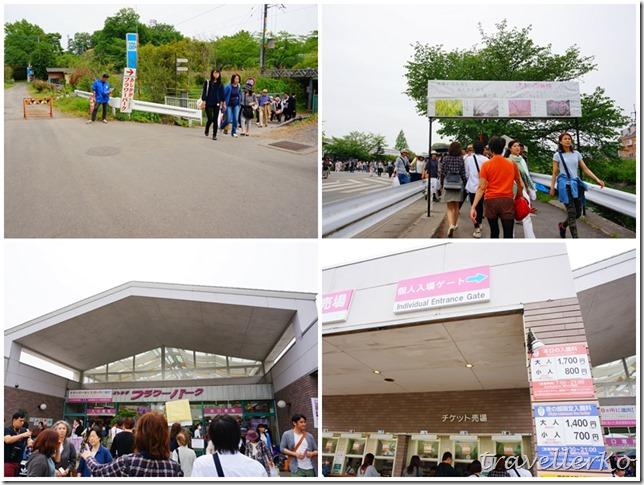 在最美的季節遇見足利紫籐花卉公園:門票交通攻略實況(下)01
