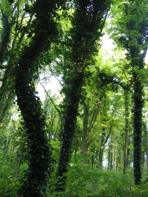 seaford nature reserve