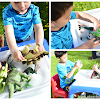 Montessori Inspired Dinosaur Clean-Up Activity