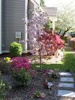 Lots of spring blooms