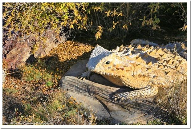 151230_Tucson_Tohono-Chul-Park_0028