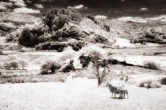 Photo: Mountain meadow (Clive Haynes)