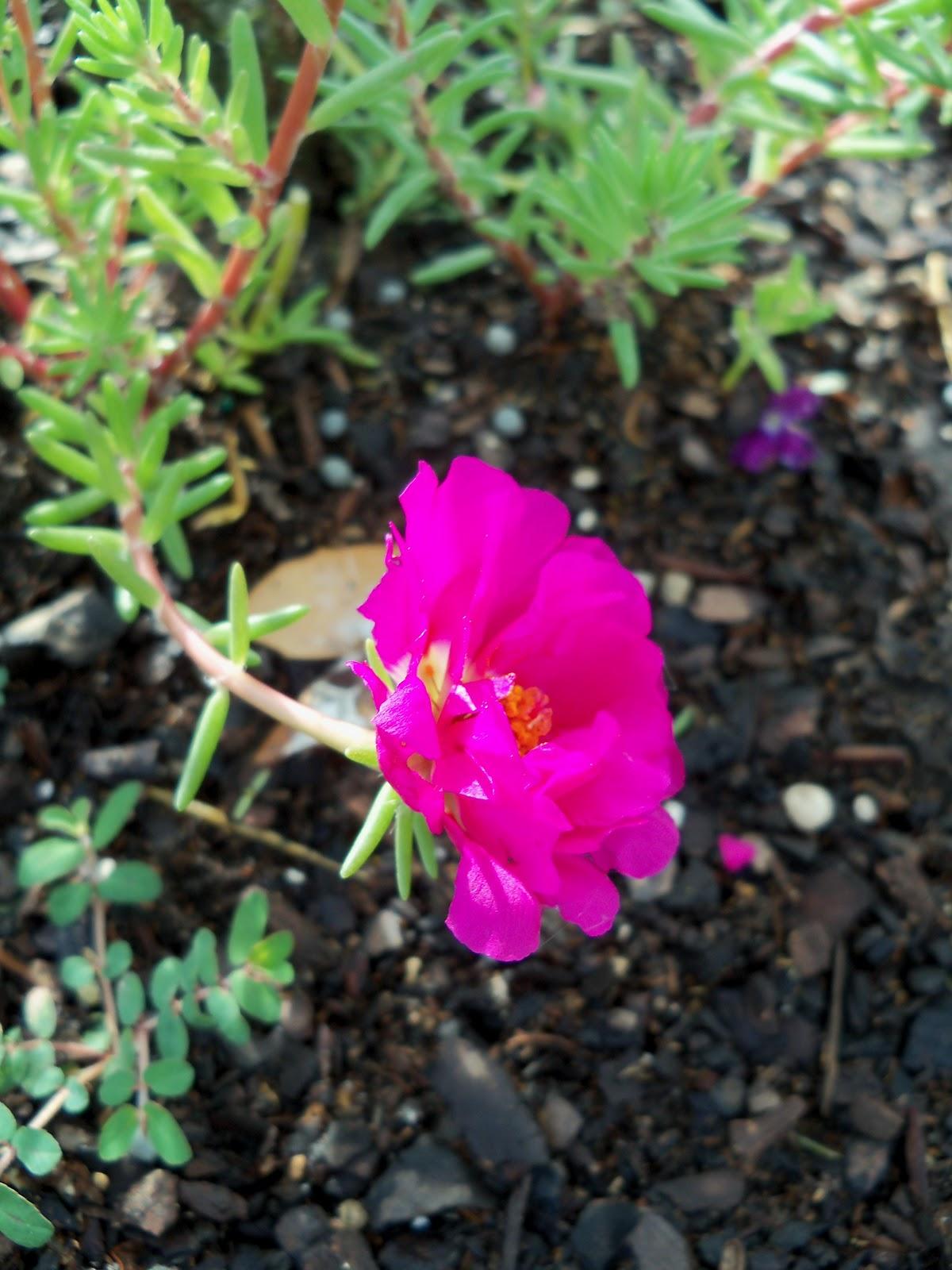 Gardening 2010, Part Two - 101_2236.JPG
