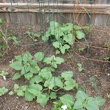 Gardening 2012 - IMG_3295.JPG