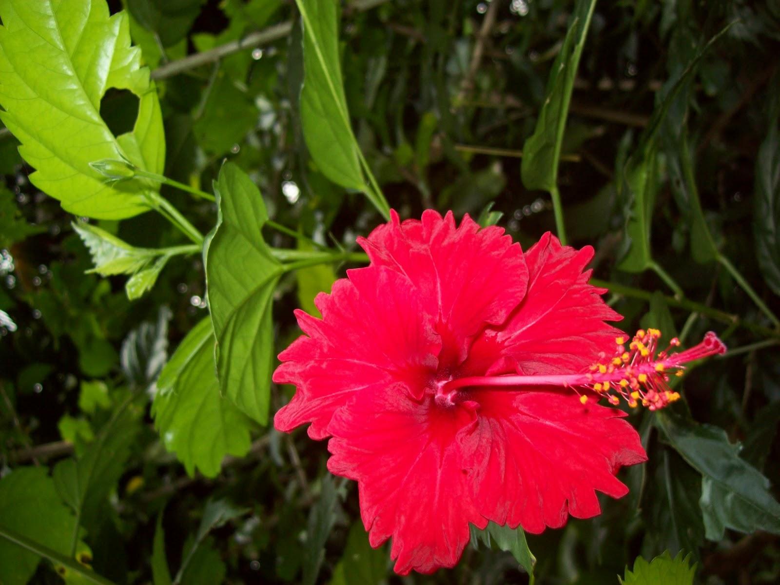 Hawaii Day 5 - 100_7283.JPG