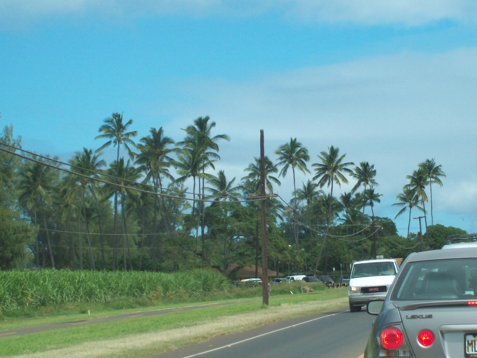 Hawaii Day 8 - 114_2177.JPG