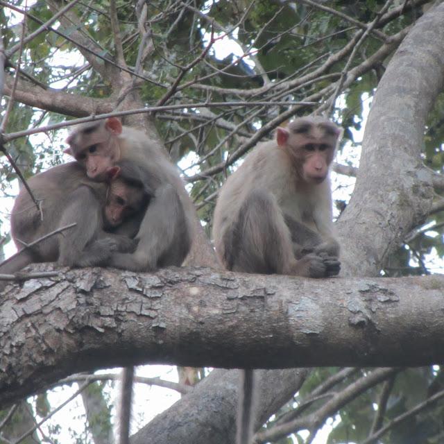 Thirunelly (Wayanad), India