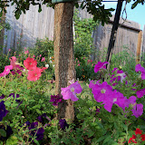 Gardening 2011 - 100_8921.JPG
