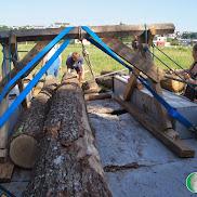 Déplacement des troncs