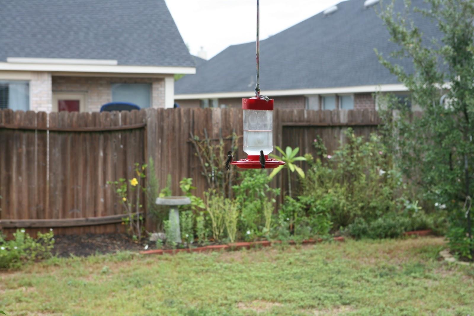 Gardening 2011 - IMG_3053.JPG