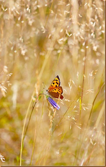 butterfly-2015-1000