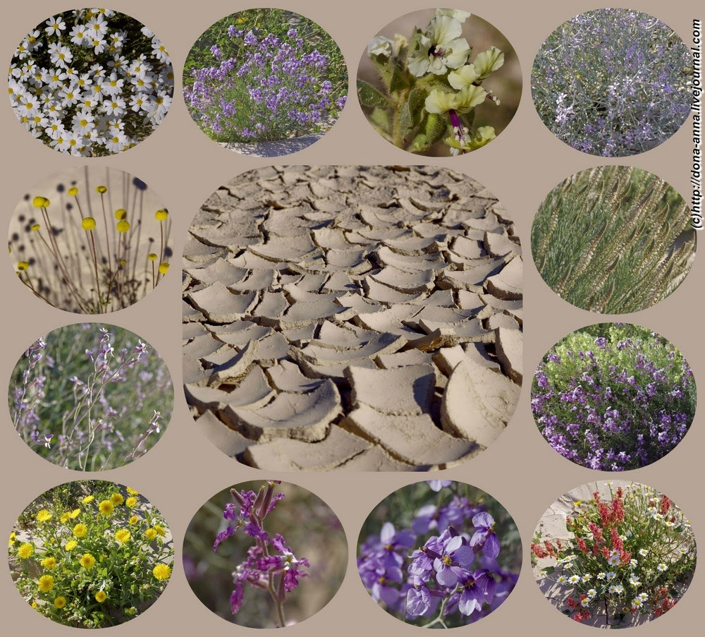 Flowers-collage-a