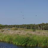 04-06-12 Myaka River State Park - IMGP4442.JPG