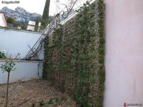 mur floral a CUERS VAR CHEZ DES PARTICULIERS mur végétal en sphaigne .mur de fleur et sedum