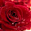 abdul salim's profile photo
