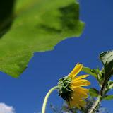 Gardening 2012 - 115_2526.JPG