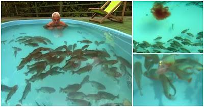 Apresentador Entra Em Piscina Infestada De Piranhas E... Não Vais Acreditar No Que Acontece!!