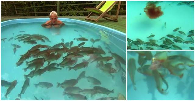 apresentador piscina infestada piranhas